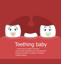 Teething baby banner with teeth vector