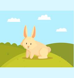 cute rabbit on green meadow vector image