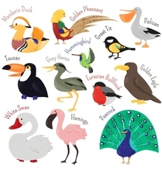 Set of cute cartoon birds isolated on white vector image