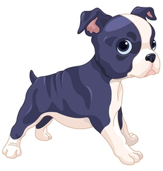Boston Terrier Cub vector