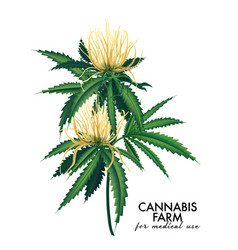 Cannabis bloom and leaves plant modern marijuana vector