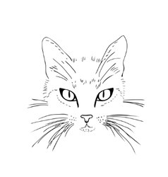 Cat face Black and white sketch vector