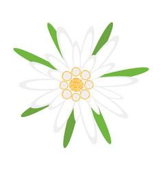 edelweiss flower symbol german oktoberfest vector image