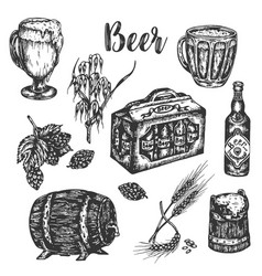 hand drawn beer set vintage color engraving vector image