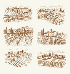 vineyard landscape france or italy vintage vector image