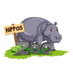 Wild hippo at the zoo vector