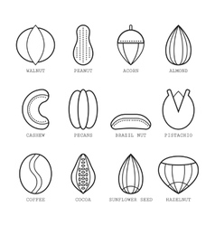 Set of flat linear icons with different nuts vector image vector image
