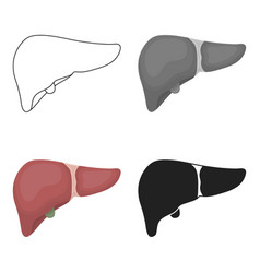 liver icon in cartoon style isolated on white vector image vector image