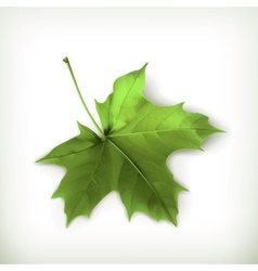 Maple leaf green vector image vector image