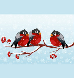 a group cartoon bullfinches on a rowan branch vector image