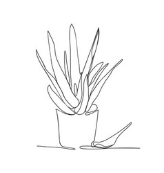 continuous line drawing aloe vera in the pot vector image