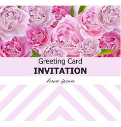 peony flowers greeting card pink flowers vector image
