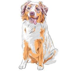 dog Red Australian Shepherd breed vector image vector image