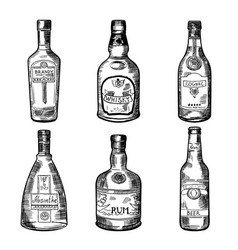 Different alcoholic drinks in bottles vector