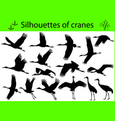 Silhouettes of cranes vector