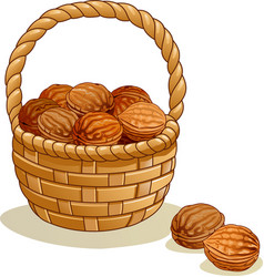 Wicker basket with walnuts isolated on a white vector