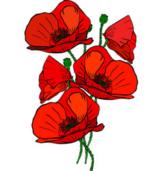 Bouquet of five red blossoming poppies and green vector