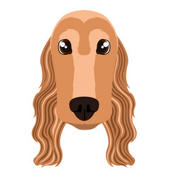cocker spaniel avatar vector image