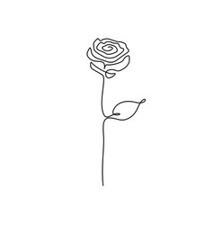 continuous one line drawing rose flower vector image