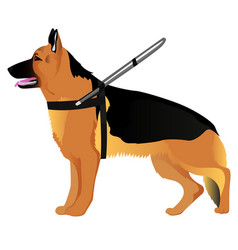 German shepherd guide dog vector
