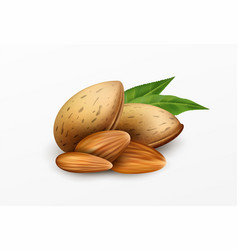 realistic almonds with green leaves isolated on a vector image