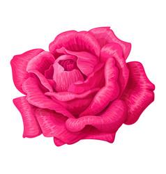 Rose flower clip art vector