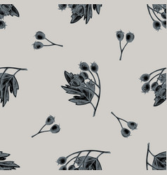 seamless pattern with hand drawn stylized hawthorn vector image