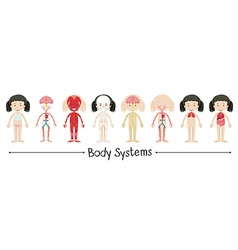 Body systems of human girl vector image