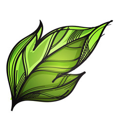 green leaf hand drawn sketch style isolated on vector image