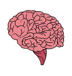 human brain icon image vector image