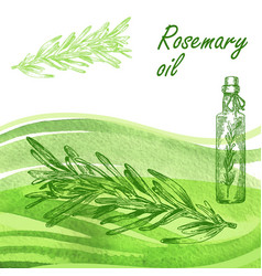 Rosemary oil set hand drawn rosemary plant on vector
