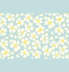 tropical exotic plumeria flowers vector image