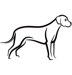 image of an dog labrador on white background vector image