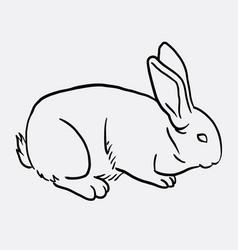 rabbit pet animal sketch vector image vector image