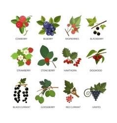 set of berries Design elements in flat vector image