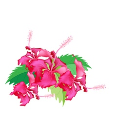 A Stack of Fresh Red Hibiscus Flowers vector image vector image