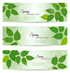 nature banners with green spring leaves vector image