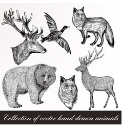 Set of detailed hand drawn animals vector