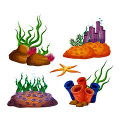 underwater ocean reefs or aquarium corals vector image