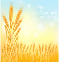 background wheat ears vector image vector image
