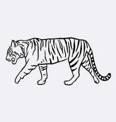 Tiger mammal animal sketch vector