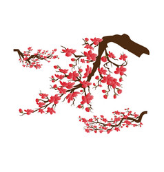 Chinese new year sakura flowers background cherry vector