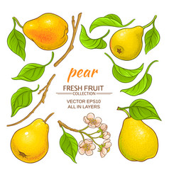 pear elements set vector image