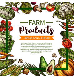 Sketch poster of farm organic vegetables vector