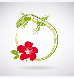 green lizard and red hibiscus vector image
