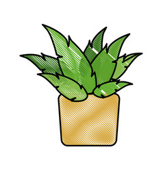 Drawing pot plant decoration botanic natural vector