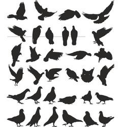 Pigeon silhouettes bird vector