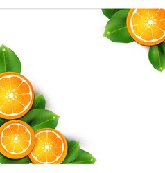 With oranges on the white background vector