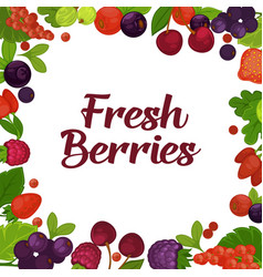 fresh tasty berries grown on farm promotional vector image