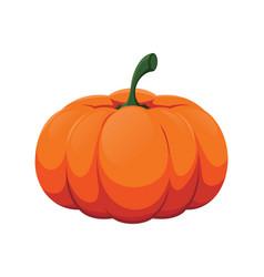 Fresh pumpkin vector